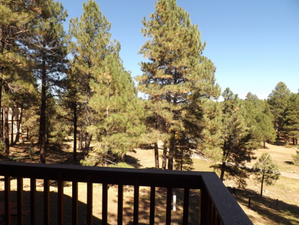 Cabin 16 Trees